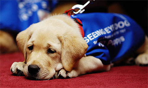 Seeing Eye Dog Program